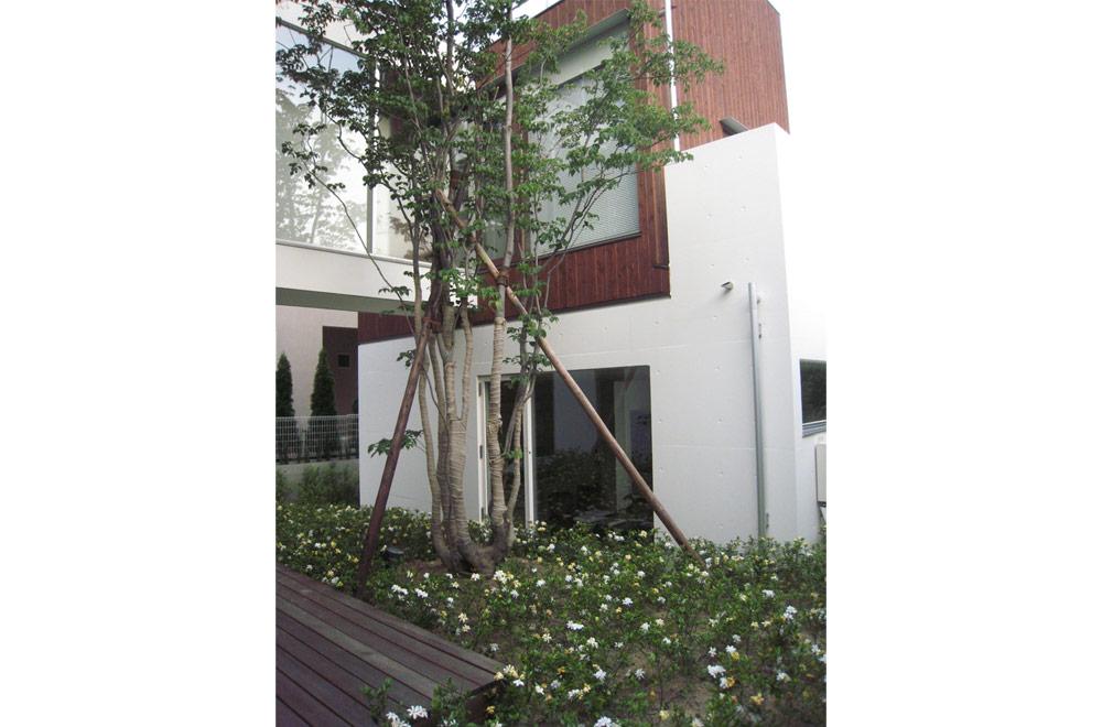 TWIN COURT HOUSE: Symbol tree
